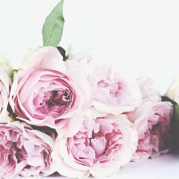 Petra Barthen Professional Skincare | Vierkant rozen